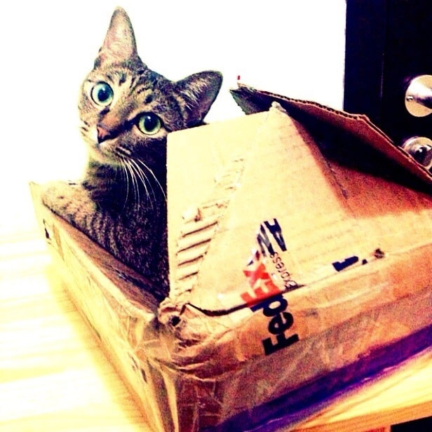 How to ship a cat - Cat-in-a-torn-FedEx-box