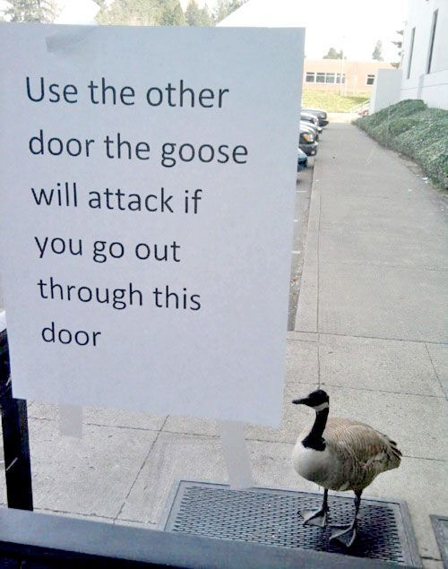 Welcome Signs: Use the other door before the goose attacks
